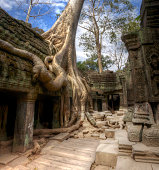 Jungle Temple Cambodia