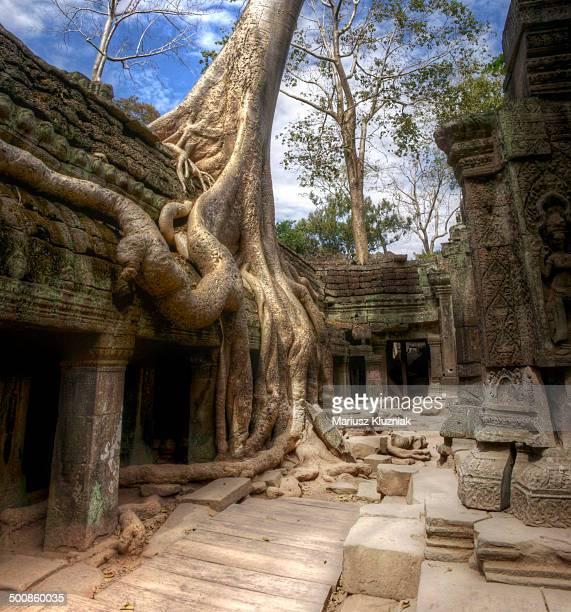 Jungle Temple Cambodia