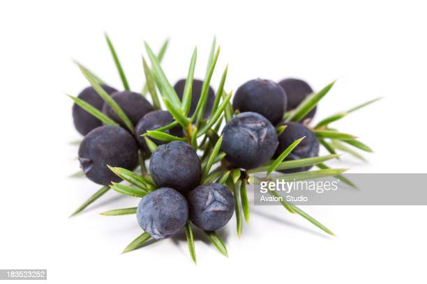 Juniper fruit on a white background