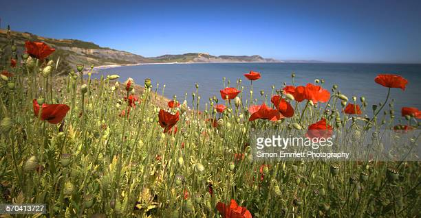 Jurassic coast through the Poppies