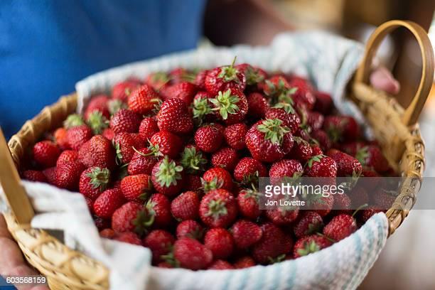 Just picked spring strawberries