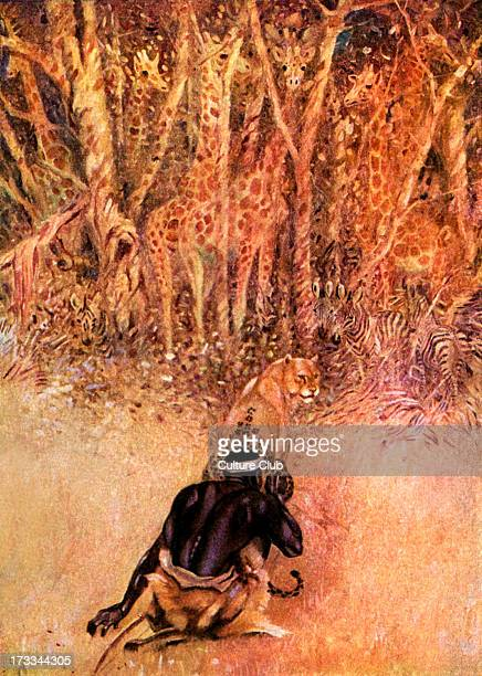Just So Stories by Rudyard Kipling How the Leopard Got His Spots Colour illustration by JM Gleeson