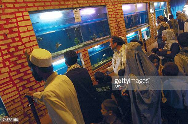 Afghan people watch fish in aquariums at the Kabul Zoo 01 June 2007 Since the overthrow of the harsh Taliban regime which denied women and Afghan...