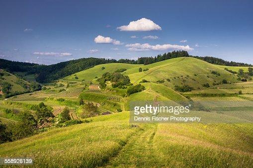 Kaiserstuhl Summer Landscape