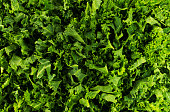 Chopped kale in a background pattern.