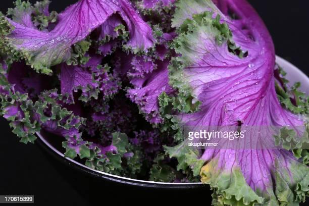 Kale Leaves - Low Key