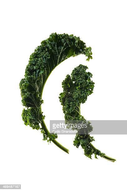 Kale on white backlit bacground