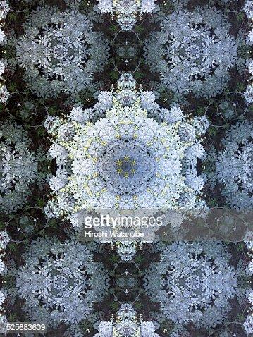 Kaleidoscope of tropical plant
