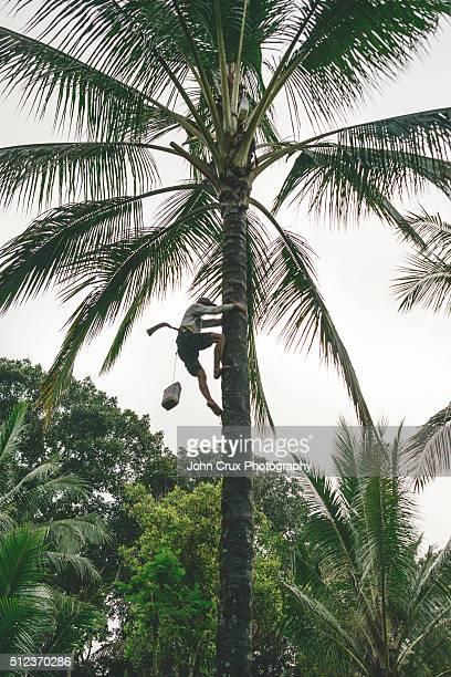 Kalibaru climber