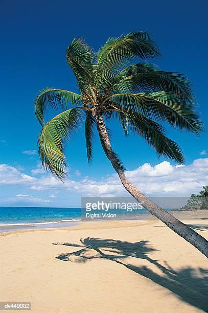 Kamaole Beach, Maui, Hawaiian Islands