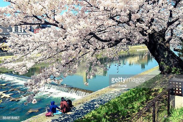 Kamogawa in Spring