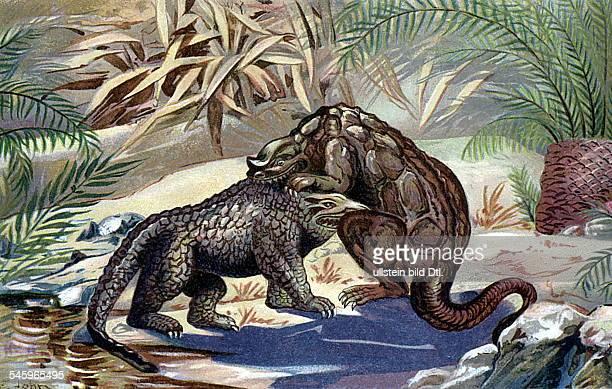 Kampf zwischen Megalosaurus undIguanodon im Hintergrund rechts einevorweltliche Cycas