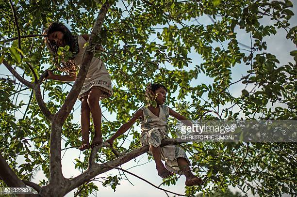 Kanbeba indigenous children play on a tree in Tres Bocas village on the bank of the Rio Negro in the Amazonia Brazil on December 9 2015 AFP PHOTO /...