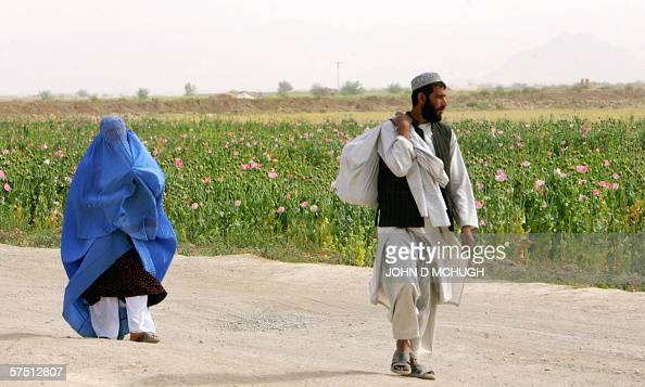 A man and woman walk past a poppy field in the Panjwayi district of Kandahar 28 April 2006 Afghanistan is one of the world's biggest producers of...