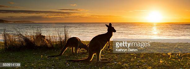 Kangaroo beach Sunrise
