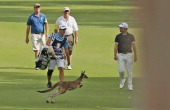 A kangaroo bounces towards Alejandro Canizares of Spain as he walks down the 16th hole during day four of the Perth International at Lake Karrinyup...