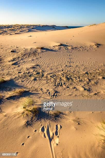 Kangaroo tracks at Friendly Beaches, Freycinet National Park, Tasmania