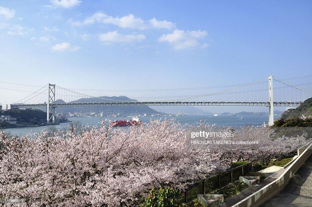 Kanmonkyo Bridge and Cherry Blossom Trees