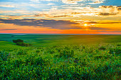 Sunset in the Flint Hills outside of Alma, Kansas with Cattle grazing in the far background.