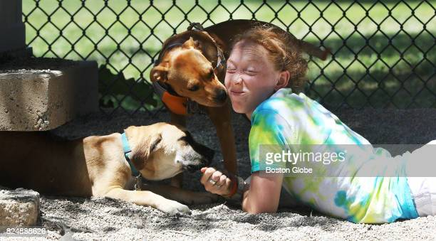 Kara Fischer coaxes 'Obi' her hound mix out from under a shed as she receives a kiss from 'Daisy' in the Thorndike Field Dog Park offleash recreation...