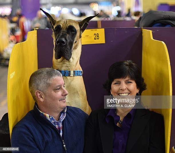 Karen and John Pacino sit with their Great Dane in the benching area at Pier 92 and 94 in New York City on the 2nd day of competition at the 139th...