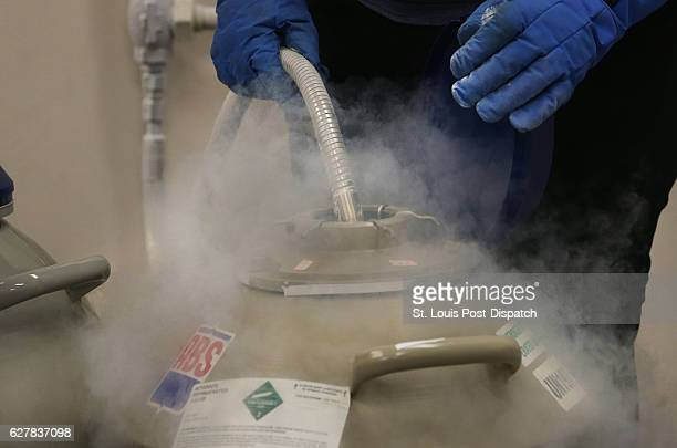 Karen Bauman cryobiology lab manager fills the tanks containing frozen semen and egg samples of various zoo animals with liquid nitrogen on Tuesday...