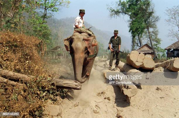 A Karen National Union guerilla wields his M16 rifle as an elephant pulls teak logs at the ethnic group's headquarters in Burma near the Thai border...