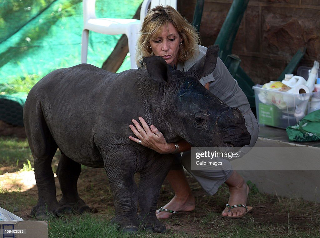 Karen Trendler cares for Ntombi, a two-month old white rhino, at Legends Golf Estate on January 12, 2013 in Limpopo, South Africa. Ntombi survived a brutal panga attack, when poachers, poached her mother earlier this week. She sustained severe head injuries and is now being cared for in a rhino orphanage.