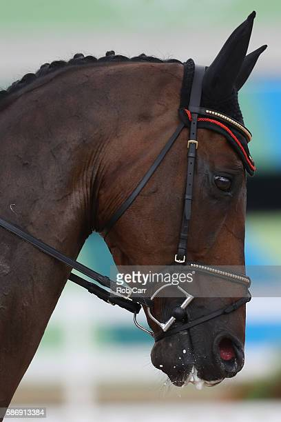 Karin Donckers of Belgium riding Fletcha Van'T Verahof competes in the Eventing Individual Dressage event during equestrian on Day 2 of the Rio 2016...