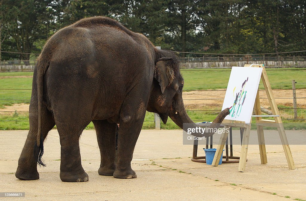 Karishma, a 13 year old female Asian elephant, paints at an easel in her enclosure at ZSL Whipsnade Zoo on September 20, 2011 in Dunstable, England. A selection of Karishma's artwork will go on display at the Zoo this weekend to celebrate Elephant Appreciation Day.