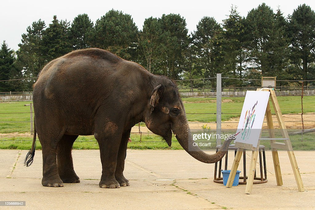 Karishma, a 13 year old female Asian elephant, paints at an easel in her enclosure at ZSL Whipsnade Zoo on September 20, 2011 in Dunstable, England. A select of Karishma's artwork will go on display at the Zoo this weekend to celebrate Elephant Appreciation Day.