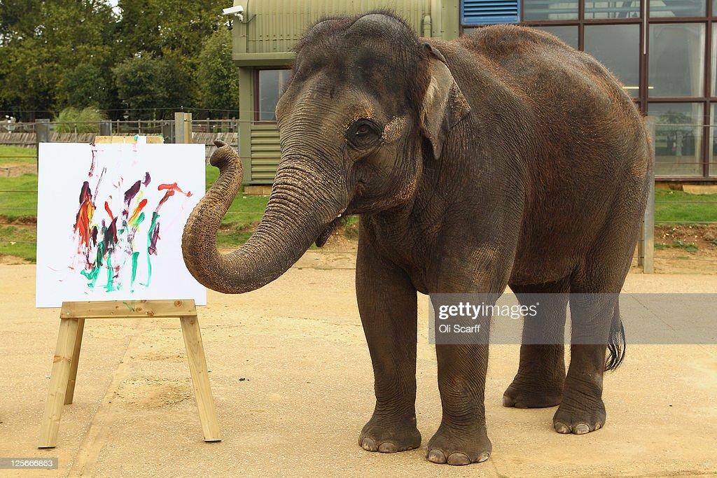 Karishma, a 13 year old female Asian elephant, stands next to her painting in her enclosure at ZSL Whipsnade Zoo on September 20, 2011 in Dunstable, England. A selection of Karishma's artwork will go on display at the Zoo this weekend to celebrate Elephant Appreciation Day.