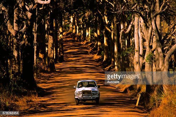 Karri trees framing a road Southwest Western Australia Australia