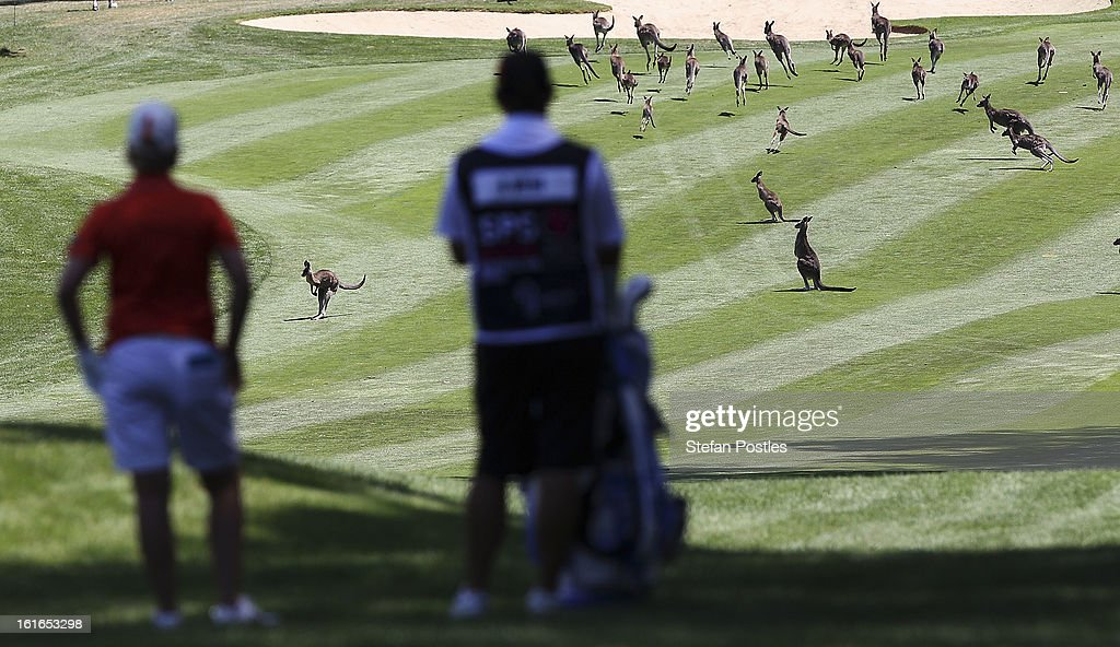 Karrie Webb of Australia waits for the kangaroos to clear the fairway during day one of the ISPS Handa Australian Open at Royal Canberra Golf Club on February 14, 2013 in Canberra, Australia.
