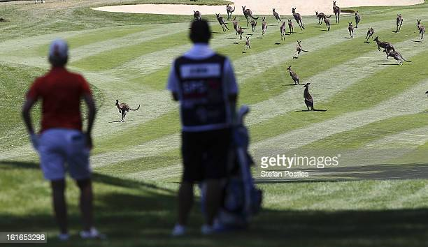 Karrie Webb of Australia waits for the kangaroos to clear the fairway during day one of the ISPS Handa Australian Open at Royal Canberra Golf Club on...