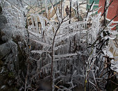 Kashmir man walks past tree branches covered in icicles during a cold day on December 31 2014 in Srinagar the summer capital of Indian administered...