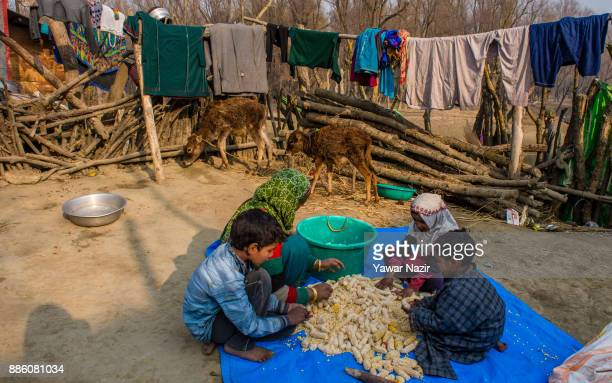 Kashmiri children along with their mother sort corn in their court yard in a village on December 05 2017 in Pattan north of Srinagar the summer...