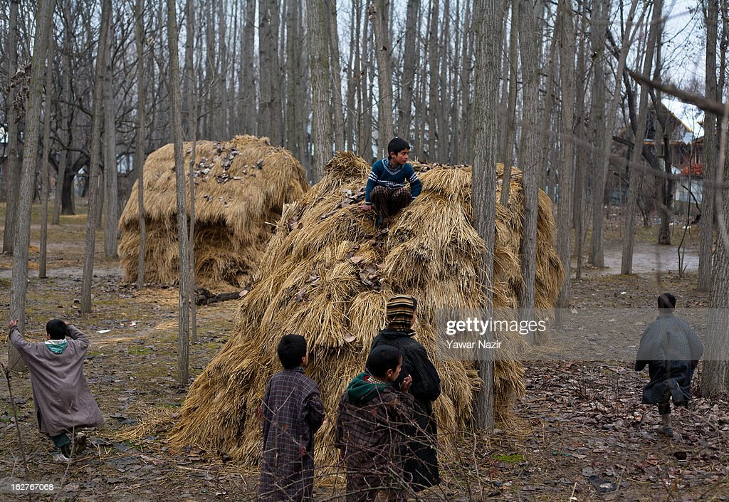 Kashmiri children play on silage or a heap of grass in a village on February 26, 2013 in Budgam west of Sringar, the summer capital of Indian Administered Kashmir, India. Kashmir has been a contested land between nuclear neighbors India and Pakistan since 1947, the year both the countries attained freedom from the British. Since 1947 the ownership of Kashmir has been disputed between Pakistan, India and China.