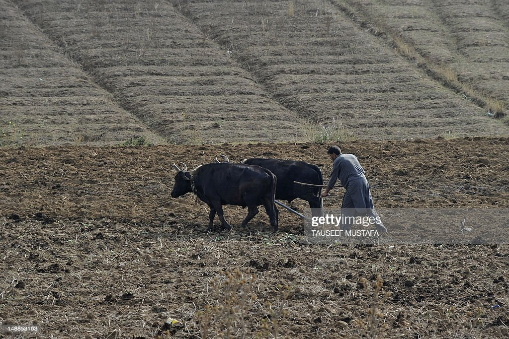 A Kashmiri farmer ploughs his rice field with a pair of oxes at Awantipora south of Srinagar on July 20,2012. India faces a challenge to ensure food security for its fast-growing population of over one billion people according to Indian Prime Minister Manmohan Singh. AFP PHOTO/ Tauseef MUSTAFA