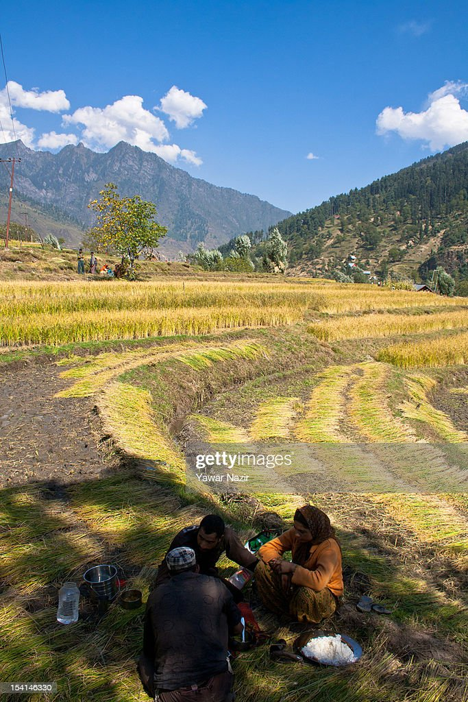 Kashmiri farmers enjoy their lunch during the harvesting of rice in paddy fields on October 15, 2012 in Sonamarg ,89km (55 miles) east of Srinagar, the summer capital of Indian administered Kashmir, India. Sonamarg, or 'Golden Meadow' is a popular tourist resort northeast of Srinagar, the summer capital of Indian administered Kashmir. Besides pine forests, gushing streams and snow-covered mountains, Thajiwas Glacier is a major attraction for tourists. Kashmir has been a contested land between nuclear neighbors India and Pakistan since 1947, the year both the countries attained freedom from the British rule.