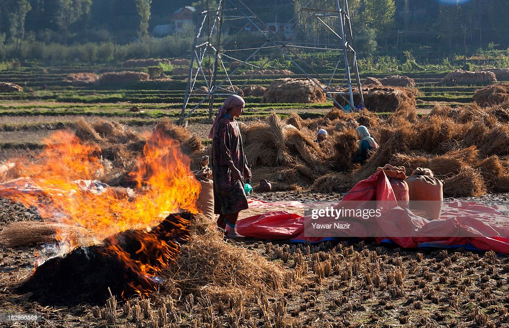 Kashmiri farmers pack rice in sacks next to burning hay in a paddy field October 03, 2013 in Sriinagar, the summer capital of Indian administered Kashmir, India. Paddy production has gone down in Kashmir during the recent years largely due to unplanned and rapid urbanisation, with the area under rice crop cultivation coming down from 122 hectares in 2010-11 to 112 hectares in 2013, according to an economic survey to the state government.