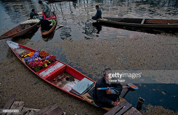 Kashmiri man with his flower laden boat waits to sell them to the tourists at the floating vegetable market on Dal Lake at dawn on November 12 2015...