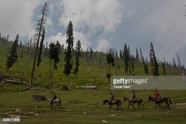 Kashmiri men ride horses in front the Deodar stumps in recently deforested in the meadows on August 14 2014 in Tosa Maidan 70 km west of Srinagar the...