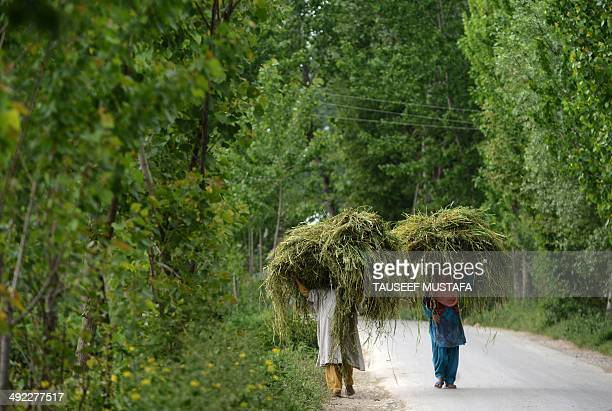 Kashmiri muslim women carry fodder for cattle near a gunbattle between Indian army soldiers and suspected armed rebels at Chadoora on the outskirts...