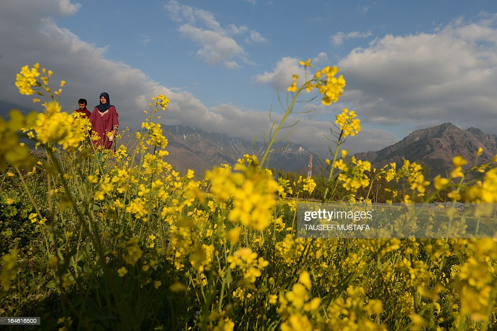 Kashmiri Muslims walk alongside a mustard field in full bloom on the outskirts of Srinagar on March 25, 2013. According to the details available from the Directorate of Agriculture of the state government of Jammu and Kashmir, the Kashmir valley comprising six districts has an estimated area of 65 thousand hectares of paddy land under mustard cultivation, which is about 40 per cent of the total area under paddy. AFP PHOTO/Tauseef MUSTAFA