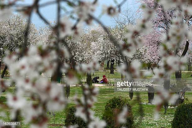 Kashmiri parkgoers sit amid blooming almond orchards as spring arrives at Badamwari in Srinagar on March 18 2013 Spring has arrived in...