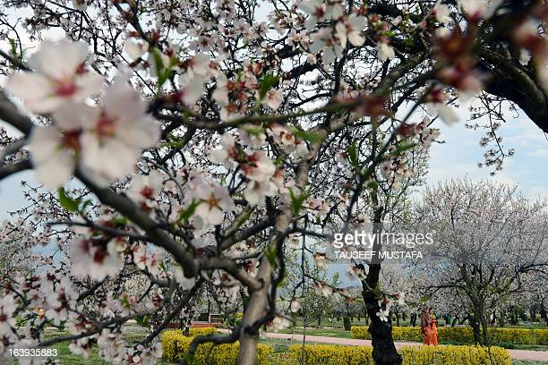 Kashmiri parkgoers walk past blooming almond orchards as spring arrives at Badamwari in Srinagar on March 18 2013 Spring has arrived in...