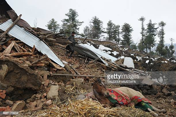 A Kashmiri villager walks near an injured horse close to a damaged house following landslides due to heavy rainfall in the village of Laden at...