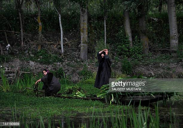 A Kashmiri woman cuts grass to feed cattle in the dal lake on a windy and rainy day in Srinagar on May 11 2012 Pakistan said that it would host the...