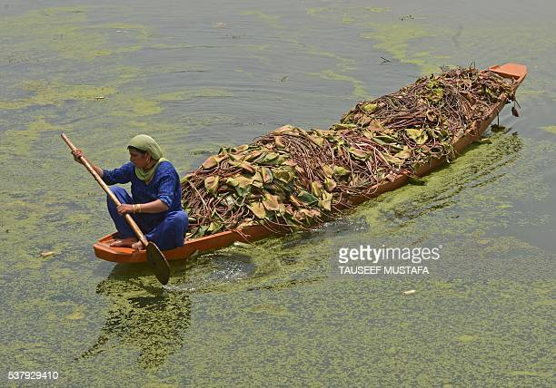 Kashmiri woman rowing a boat carrying a lotus roots for cattles through the polluted waters of Dal Lake in Srinagar on June 32016 Dal lake has shrunk...